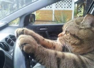o que significa drive home